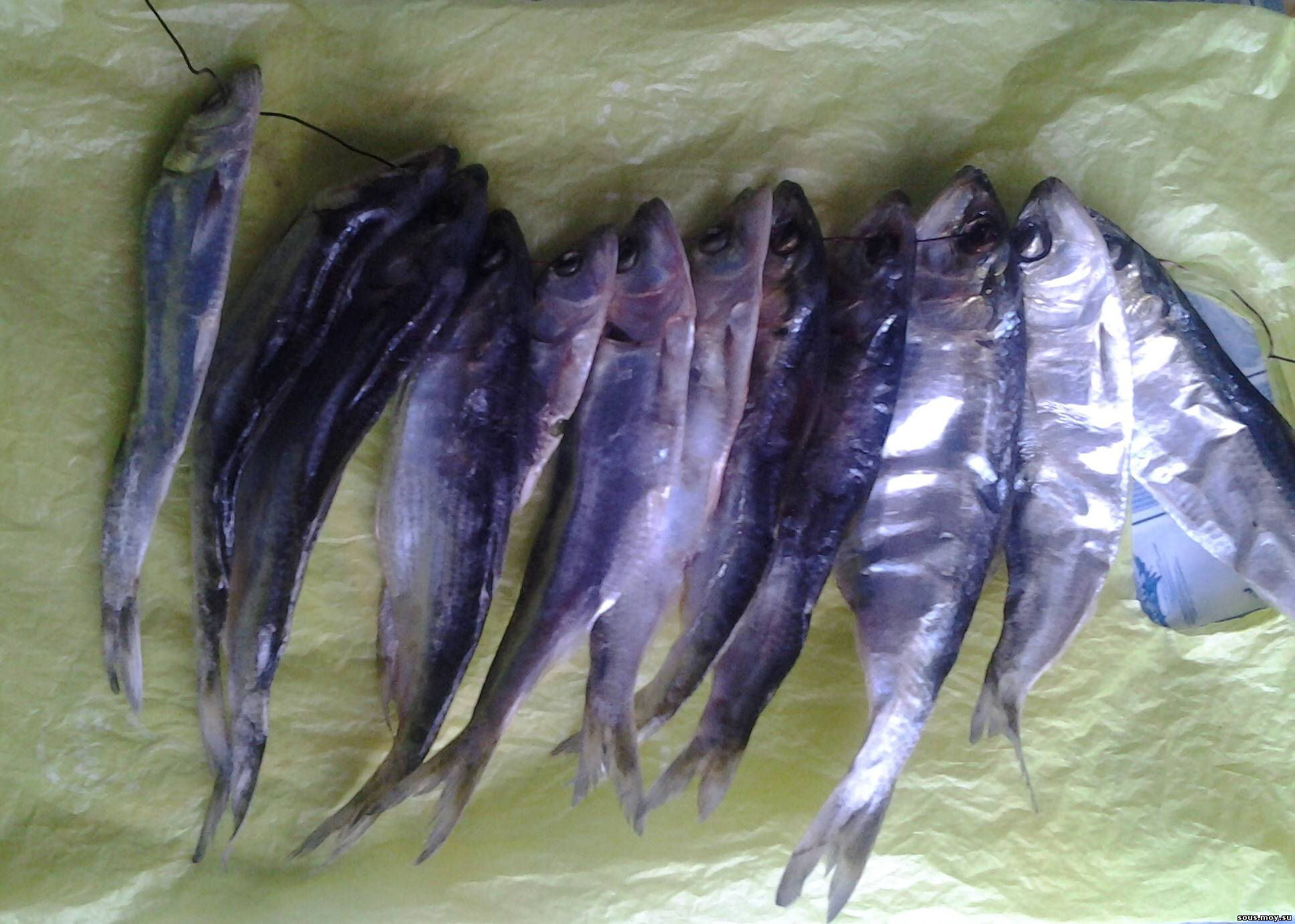 рыба пузанок .как приготовить?